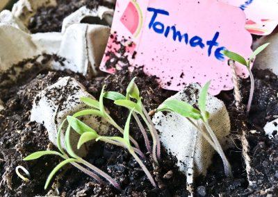 Primeras plantas