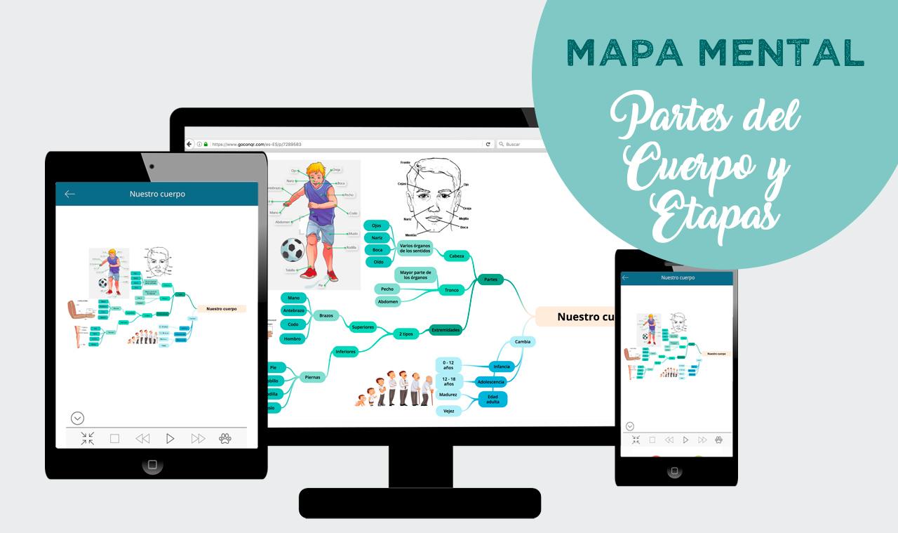 mapa mental partes del cuerpo y etapas de la edad